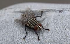 害虫駆除や調査
