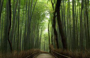 京都市ゴミの分別についてのコラム①