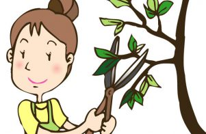 植木・庭木の剪定、お手入れについて 3